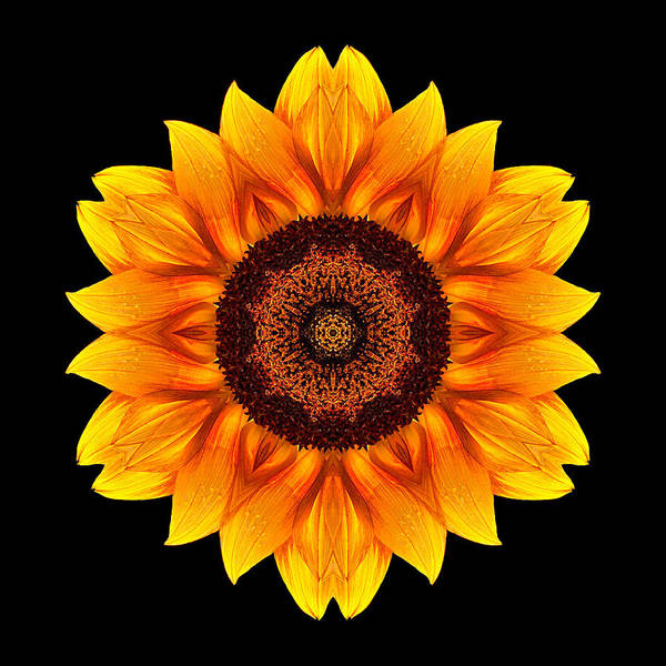 Photograph - Yellow And Orange Sunflower Vi Flower Mandala by David J Bookbinder