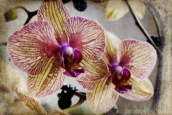 Photograph - Yellow And Purple by Milena Ilieva