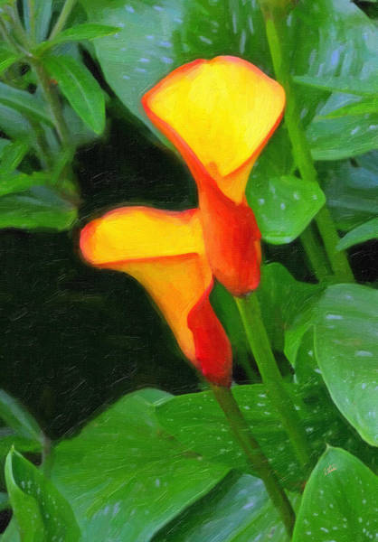 Painting - Yellow And Red Cala Lilies by Dean Wittle