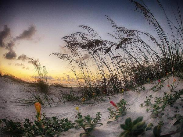 Digital Art - Yellow And Red Flowers On The Beach by Michael Thomas