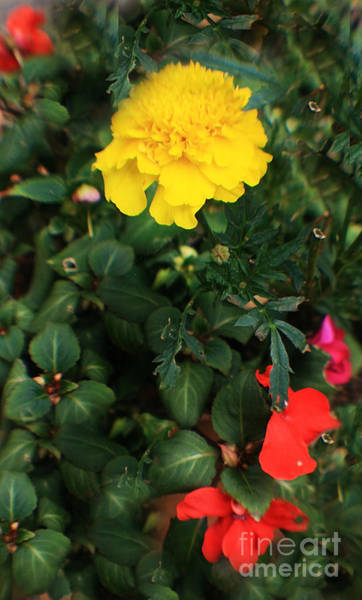 Photograph - Yellow And Red - In A Sea Of Green by Doc Braham