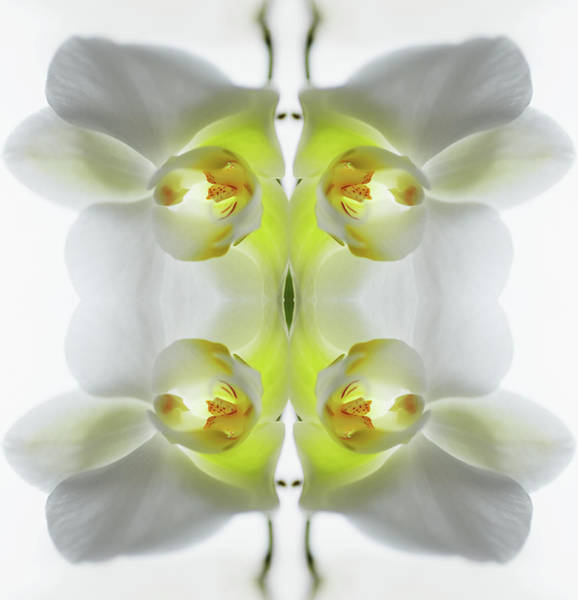 Photograph - Yellow And White Orchid by Silvia Otte