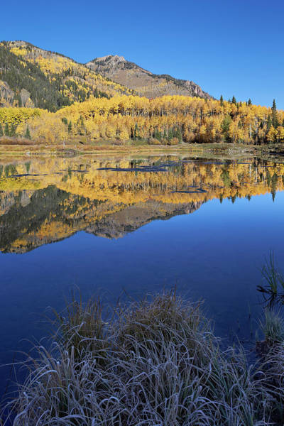 Priest Lake Photograph - Yellow Aspen Trees Reflected In Priest by James Hager / Robertharding