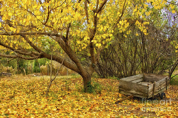 Yellow Autumn Leaves And Wooden Wagon Art Print