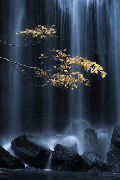 Water Fall Photograph - Yellow Autumn by Yuki Yatsushima