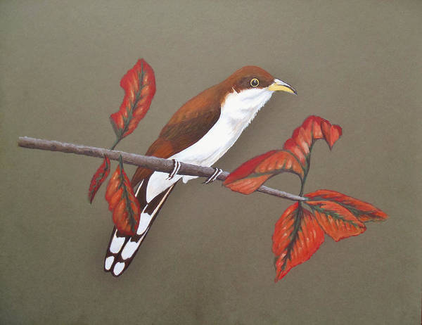 Wall Art - Painting - Yellow-billed Cuckoo by Kevin Cochran