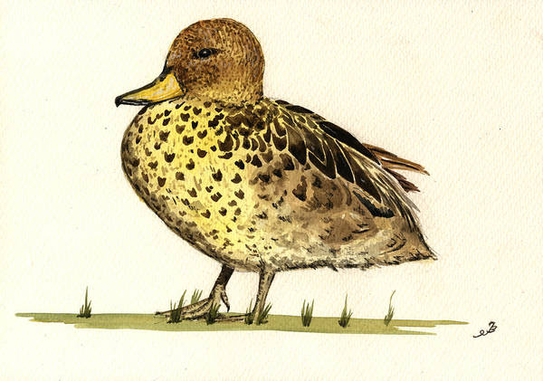 Wall Art - Painting - Yellow Billed Teal  by Juan  Bosco