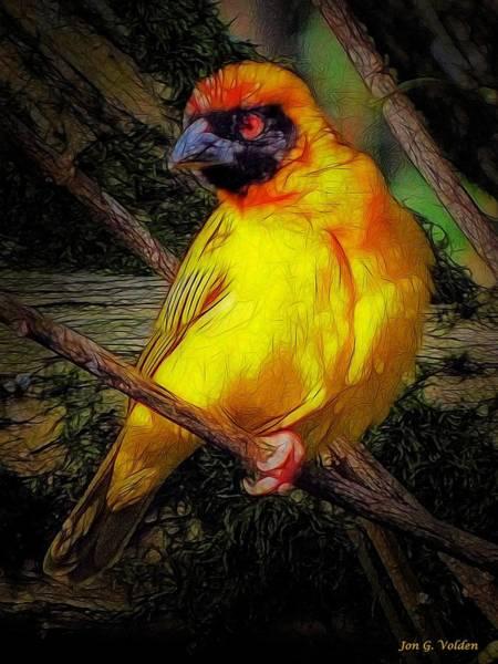 Painting - Yellow Bird by Jon Volden