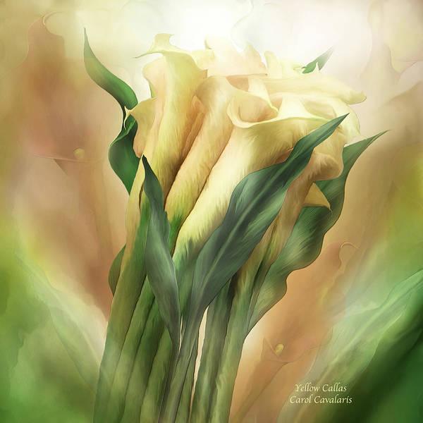 Wall Art - Mixed Media - Yellow Callas by Carol Cavalaris