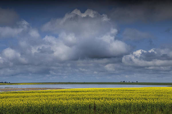 Photograph - Yellow Canola Field By A Lake In Southern Saskatchewan by Randall Nyhof