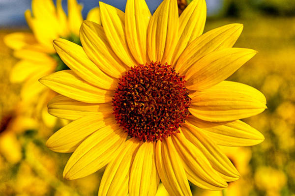 Photograph - Yellow by Cat Connor