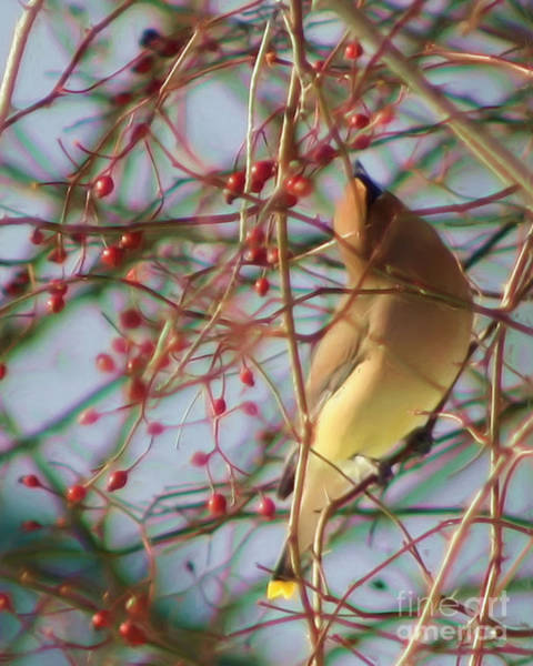 Painting - Yellow Cedar Waxwing Bird by Smilin Eyes  Treasures