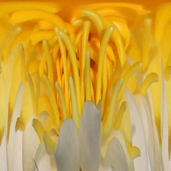 Photograph - Yellow Center 1 by Jim Baker