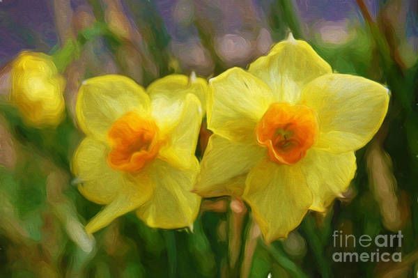 Photograph - Yellow Daffodil Painting by Andee Design