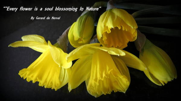 Photograph - Yellow Daffodils With Verse by Kay Novy