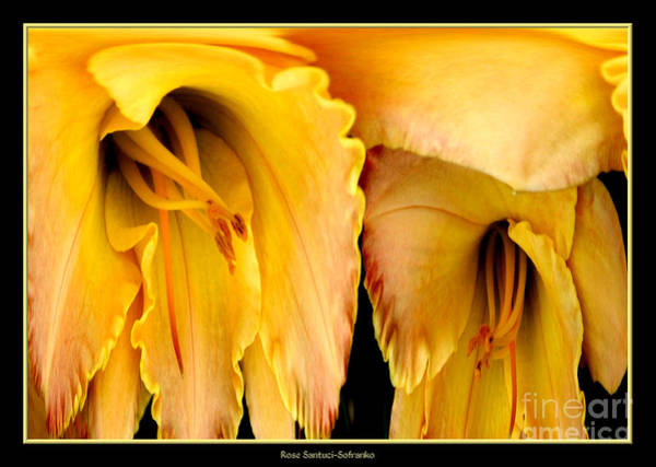 Photograph - Yellow Daylily Abstract by Rose Santuci-Sofranko