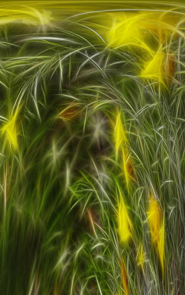 Vertical Line Digital Art - Yellow Flower Abstract by Linda Phelps