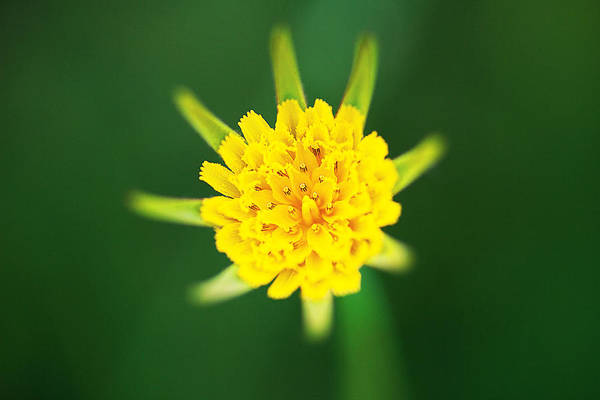 Digital Art - Yellow Flower by David Davies