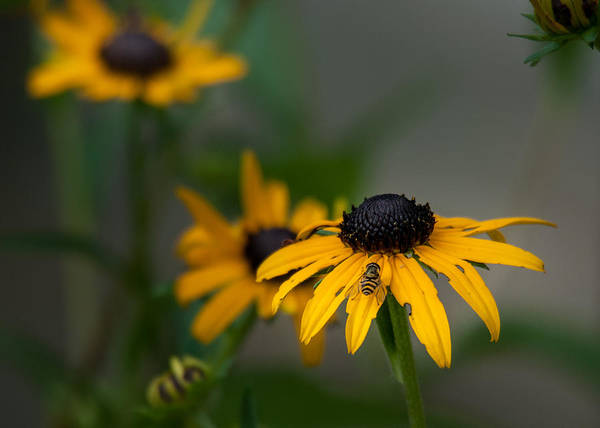 Photograph - Yellow Flower by David Hart