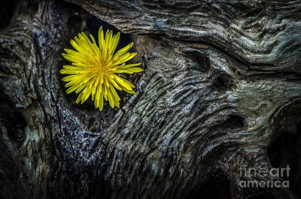 Photograph - Yellow Flower Driftwood by Michael Arend
