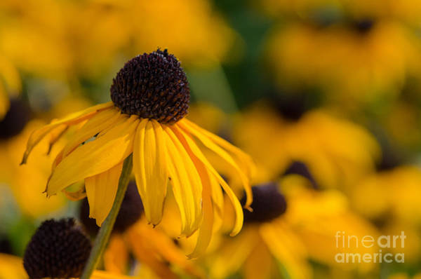 Photograph - Yellow Flower by Michael Arend