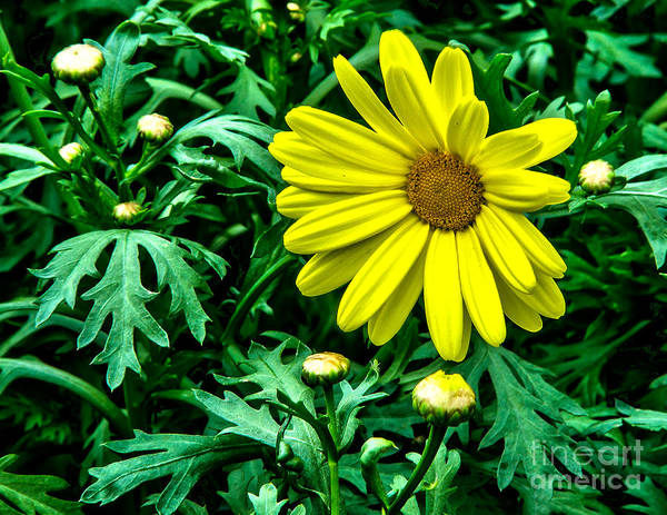 Wall Art - Photograph - Yellow Flower Of Spring by Nick Zelinsky
