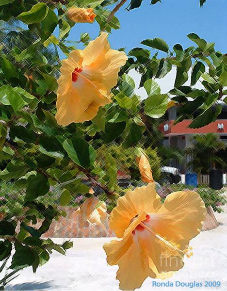Photograph - Yellow Flower by Ronda Douglas