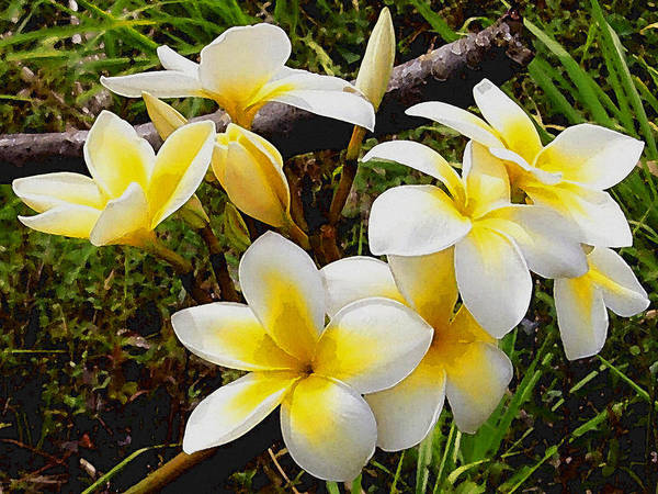 Digital Art - Yellow Flowers 1 by David Hansen