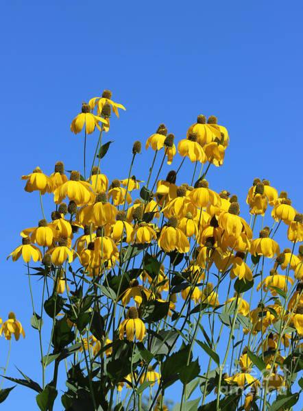 Photograph - Yellow Flowers Blue Sky by Karen Adams