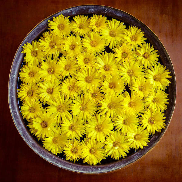 Floristry Photograph - Yellow Flowers by Dutourdumonde Photography