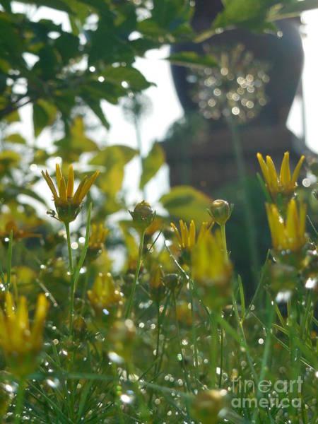 Rowena Photograph - Yellow Flowers In Summer Rain I I by Rowena Throckmorton
