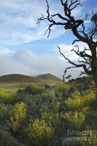 Photograph - Yellow Flowers On Mauna Kea by Charmian Vistaunet