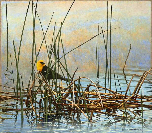 Bullrush Painting - Yellow Headed Blackbird On Rush by R christopher Vest