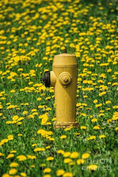 Water Hydrant Photograph - Yellow by Henry Kowalski