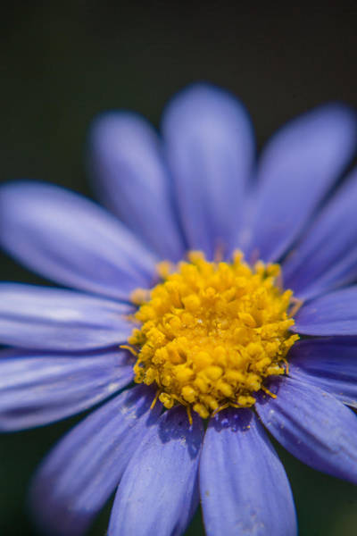 Photograph - Yellow In The Middle by Scott Campbell