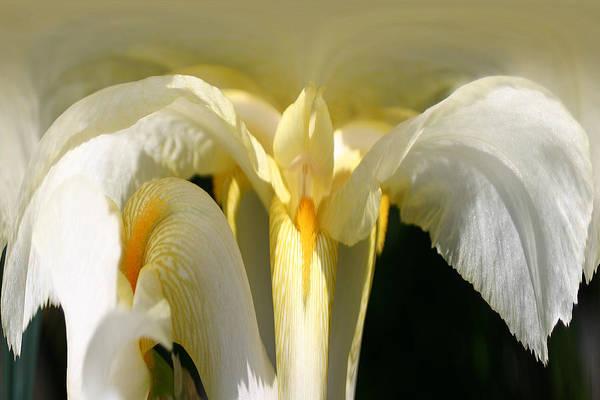Photograph - Yellow Iris 102 by Jim Baker