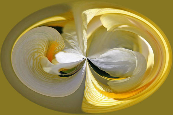 Photograph - Yellow Iris Series 106 by Jim Baker