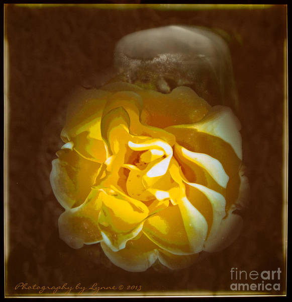 Photograph - Yellow Is Beautiful by Gena Weiser