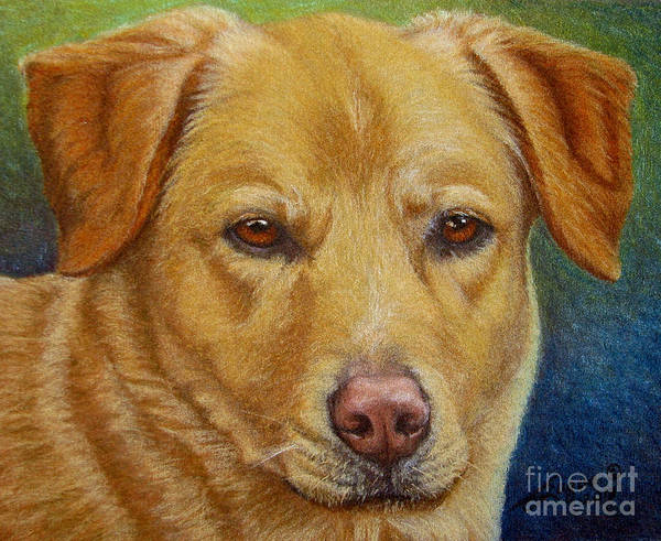 Wall Art - Drawing - Yellow Lab - Pastel by Beverly Fuqua