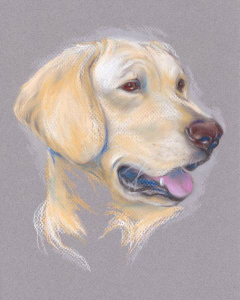 Pastel - Yellow Labrador Retriever Portrait by MM Anderson