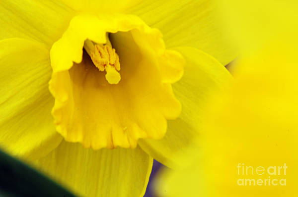 Photograph - Yellow by Larry Ricker