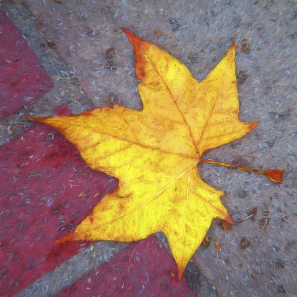 Wall Art - Photograph - Yellow Leaf Autumn by Carol Leigh