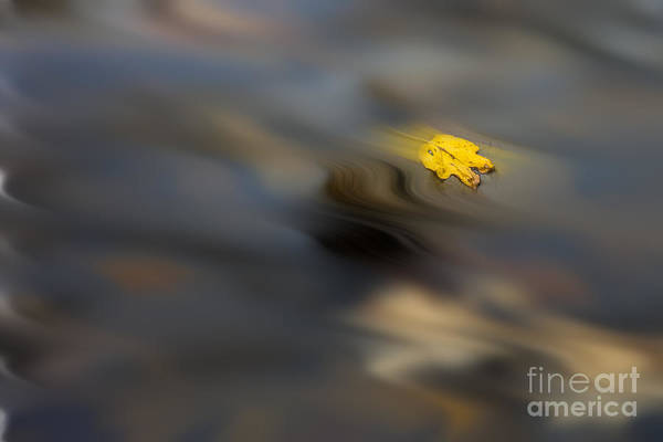 Photograph - Yellow Leaf Floating In Water by Dan Friend