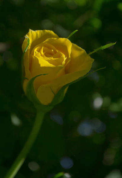 Photograph - Yellow Light by Rima Biswas