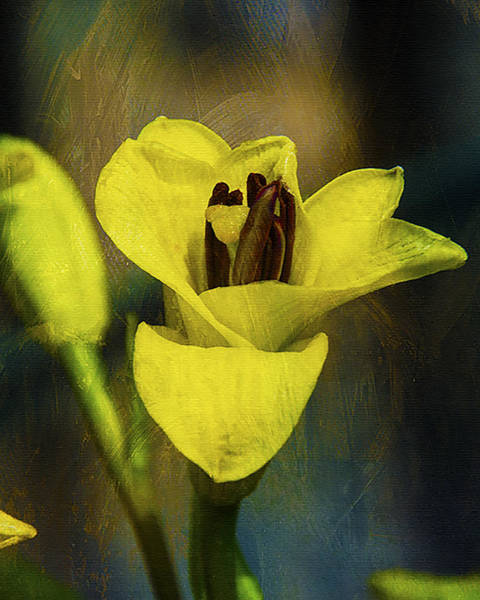 Wall Art - Photograph - Yellow Lilly  by Dave Sandt