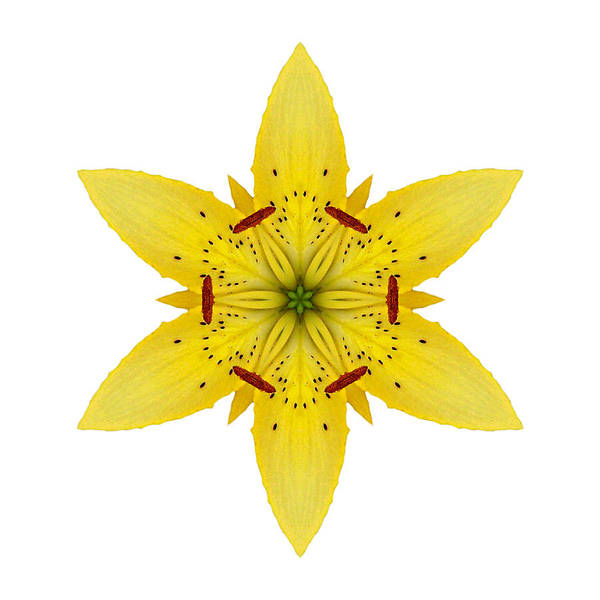 Photograph - Yellow Lily I Flower Mandala White by David J Bookbinder