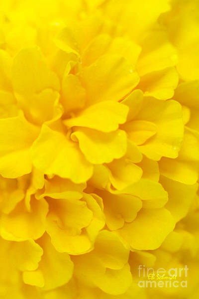 Digital Art - Yellow Marigold by E B Schmidt