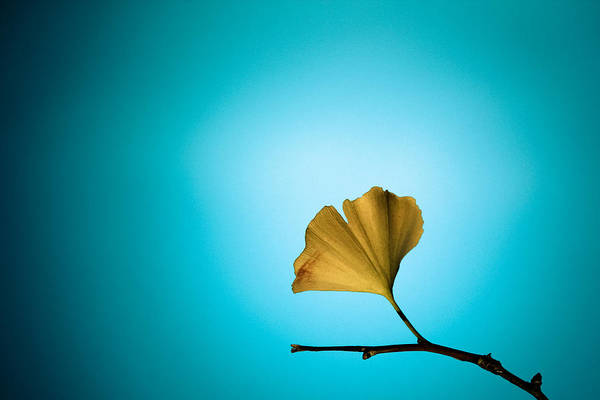 Photograph - Yellow On Blue by Carrie Cole