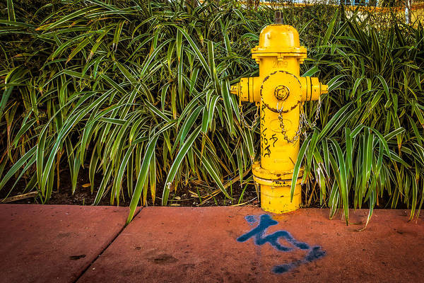 Photograph - Yellow On Guard by Melinda Ledsome