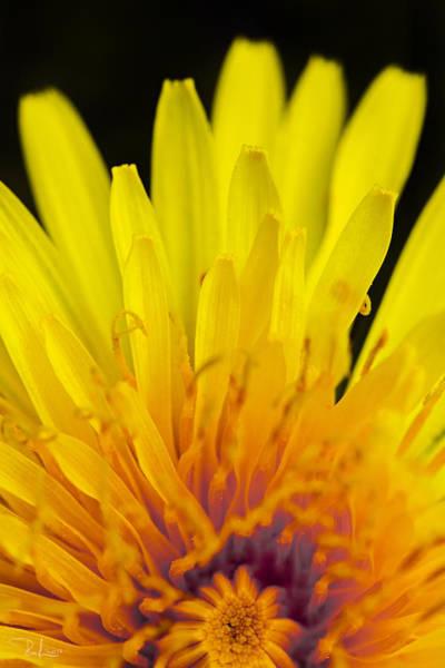 Photograph - Yellow by Raffaella Lunelli